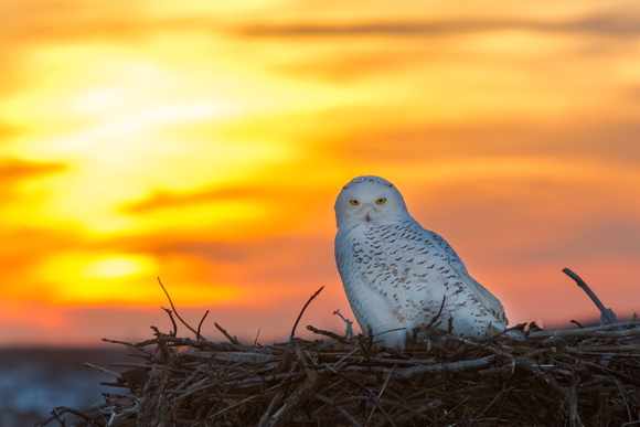 Snowy at sunset: Jamie Coughlin