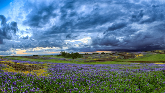 Table Mountain: Wildflowers and Distant Storm